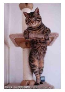 可爱猫猫004ddfdsfa