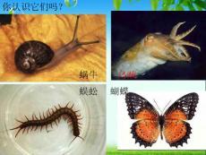 第三节 软体动物和节肢动物(课改)