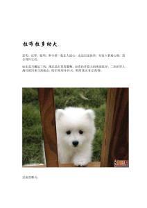 精品宠物狗的种类图片
