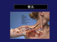 臂丛神经损伤