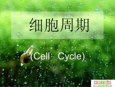 细胞周期及其划分