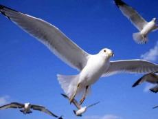第七课人类的翅膀资料