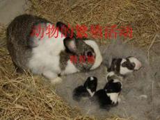 动物的繁殖活动(教育版)
