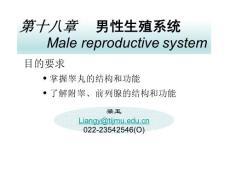 【组织学与胚胎学】第十八章 男性生殖系统.ppt
