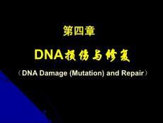 第04章 DNA损伤