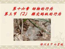 探究蚂蚁的行为[最新]