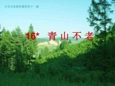 青山不老教学PPT课件人教版语文六年级上册第16课