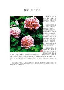 牡丹,樱花,桃花,君子兰,荷兰郁金香