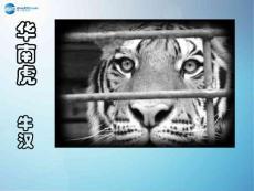 七年级语文下册 第六单元《28 华南虎》课件