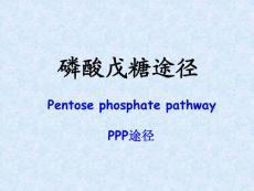 16a生化-戊糖途径