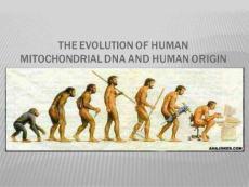 线粒体进化与人类起源