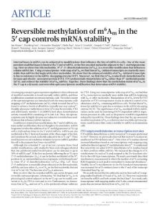 nature21022-Reversible methylation of m6Am in the 5′ cap controls mRNA stability