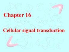 第十六章  细胞信息传递