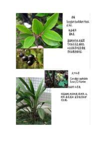 园林植物图片集