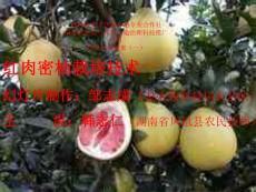 培训资料(一)红肉蜜柚种植培训幻灯片