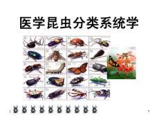 鳞翅目-健康与环境生态研究..