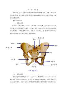 骨盆女性骨盆标志髂嵴骶岬..