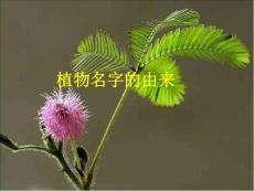 植物名字的由来