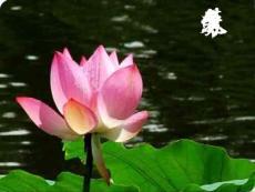高中语文3.5《苏幕遮》课件1新人教版选修《中国古代诗歌散文欣赏》
