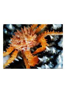 2011年2月1日 Alaska King Crab