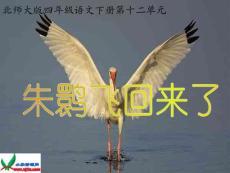 北师大版四年级语文下册《朱鹮飞回来了_2》PPT课件