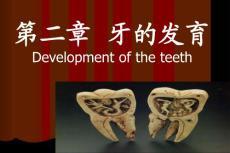 牙的发育_幼儿/小学教育-幼儿教育