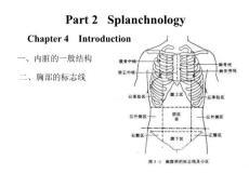 [★生物医学】消化系统解剖学图谱讲解