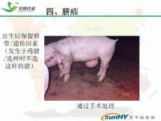 爱畜牧网站:猪场常见问题分析及对策下
